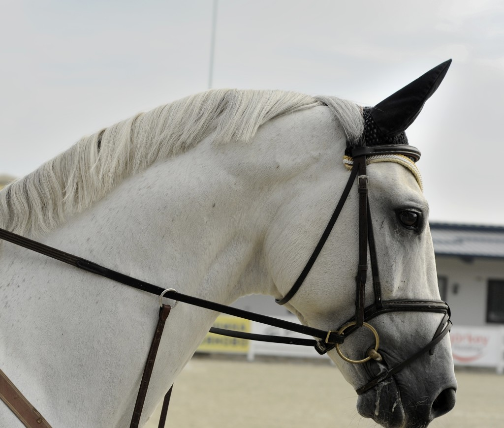 whitehorse, gratitude, one way, coach,